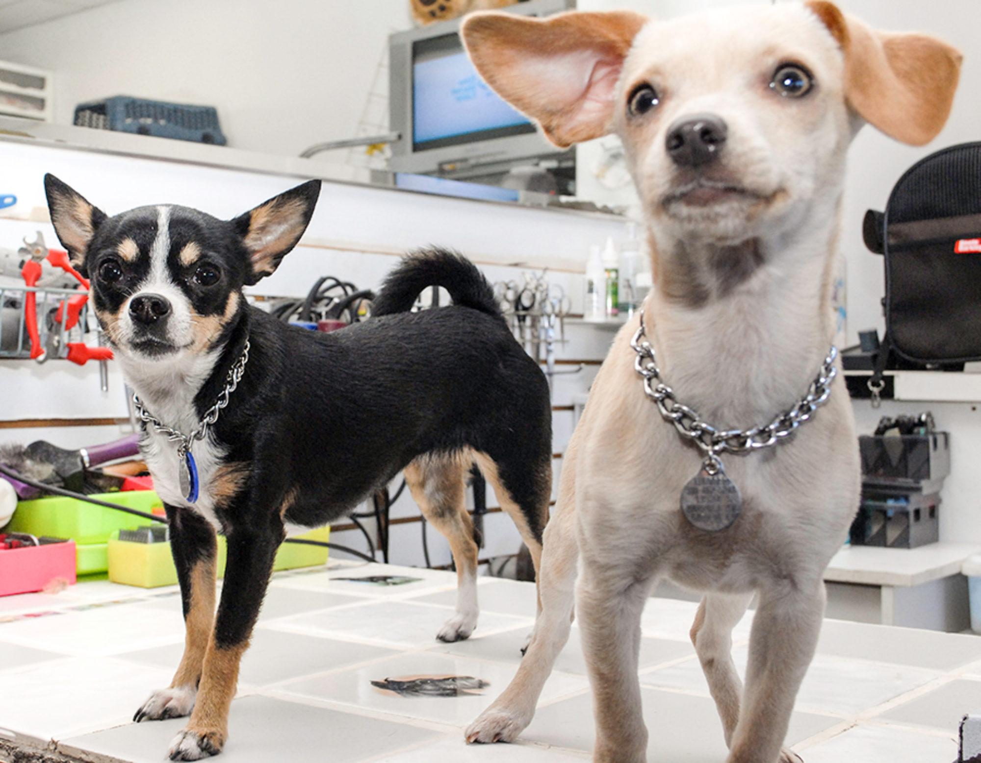 Pup E Tails LLC